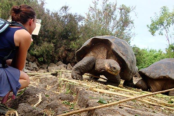 land Tortoise
