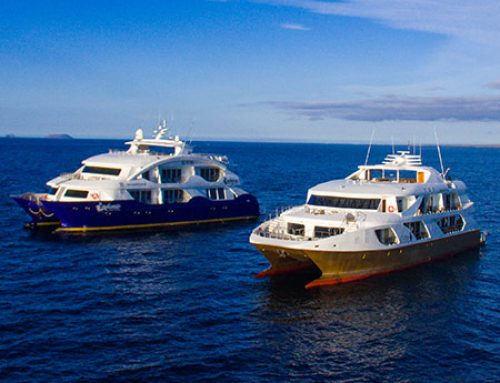 Traveling aboard Galapagos Yachts – Blending Nature with Luxury