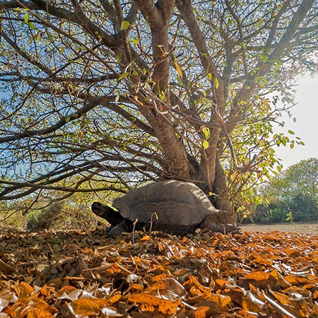 The Best Time to Visit the Galapagos Islands